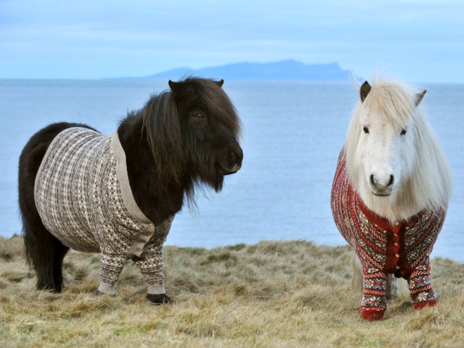 shetland-ponies-cardigans1